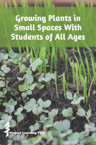 Growing plants in small spaces with students of all ages