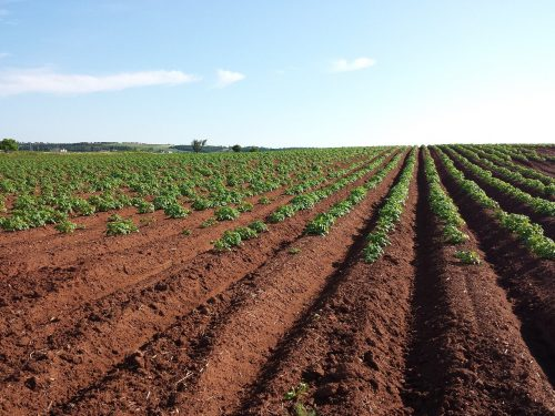 photo-of-a-tilled-field-of-crops