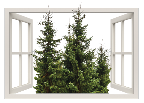 Window-opening-to-evergreen-trees
