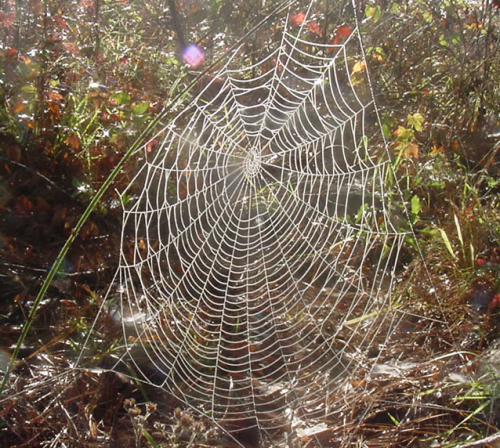 spider-web-in-the-sunlight