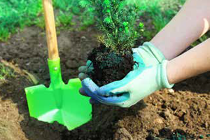 Thumbnail_hands planting tree