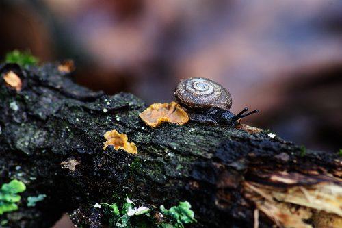 snail-on-a-log