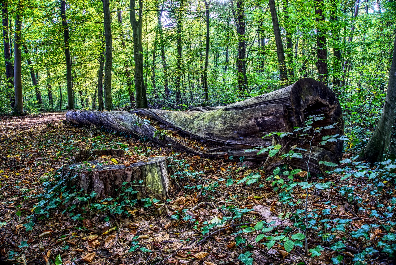 Fallen tree in a forest