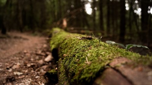 Log in the forest with moss growing on it