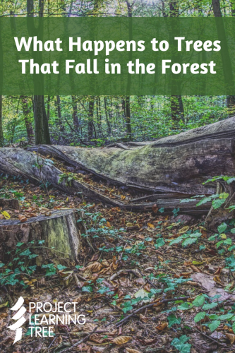 What happens to trees that fall in the forest
