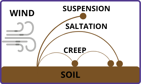 wind-pushes-soil-suspending-it-in-the-air-and-moving-long-distances-saltation-is-when-soil-is-carried-through-short-bursts-of-wind-and-creep-is-when-soil-is-pushed-short-distances-by-wind.