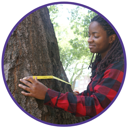 young woman measures a tree trunk
