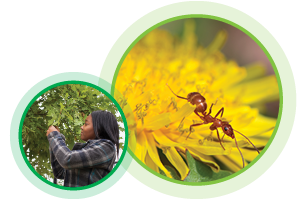 Image 1: Girl Looking Closely at tree. Image 2: Close up of Ant crawling on yellow flower