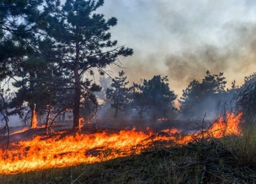 landscape photo of a fire spreading across grass and up a tree