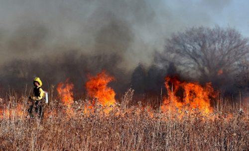 firefighters beside a brush fire