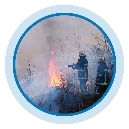 firefighters work to extinguish a fire in a field full of small trees and brush