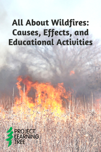 All about wildfires: causes, effects, and educational activities