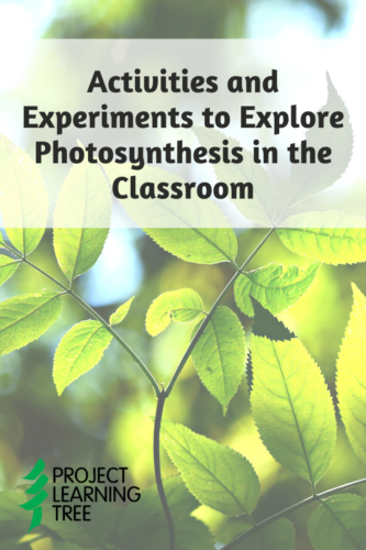 Activities and Experiments to Explore Photosynthesis in the Classroom